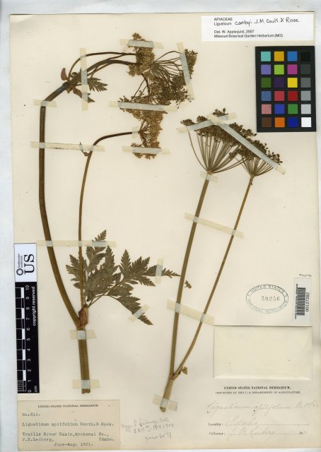 http://collections.mnh.si.edu/search/botany/?irn=2107224