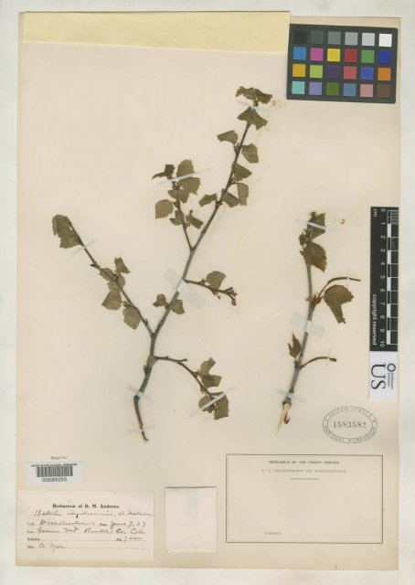 http://collections.mnh.si.edu/search/botany/?irn=2123006
