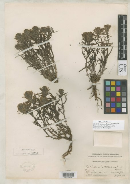 http://collections.mnh.si.edu/search/botany/?irn=2104261
