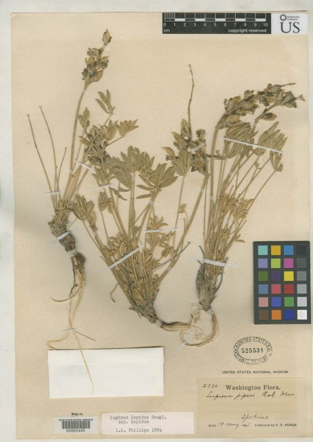 http://collections.mnh.si.edu/search/botany/?irn=2104891