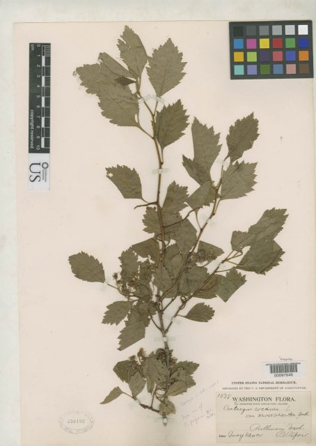 http://collections.mnh.si.edu/search/botany/?irn=2138678