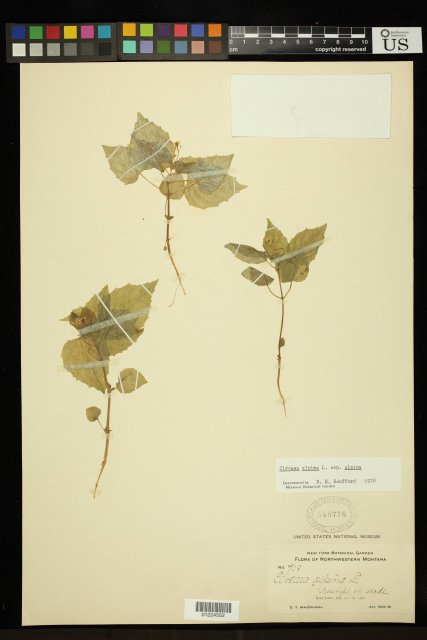 http://collections.mnh.si.edu/search/botany/?irn=11183645