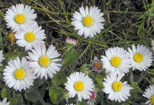http://www.bioimages.org.uk/vfg/MWSt/Nikon950/2000/00-05/00-05-13/00E13D_3.jpg