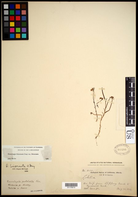 http://collections.mnh.si.edu/search/botany/?irn=10682843