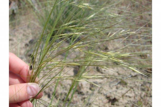 http://plants.usda.gov/java/largeImage?imageID=hecoc8_003_ahp.jpg