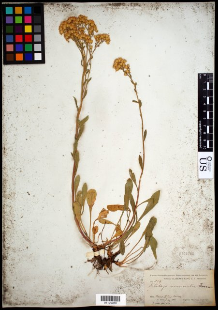 http://collections.mnh.si.edu/search/botany/?irn=10752165