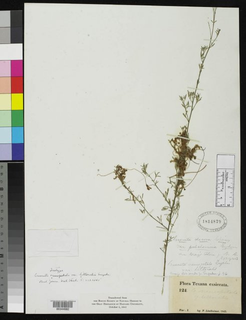 http://collections.mnh.si.edu/search/botany/?irn=2081032