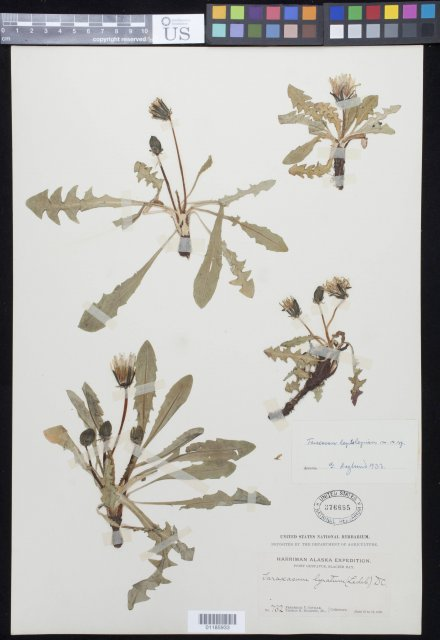 http://collections.mnh.si.edu/search/botany/?irn=10880214