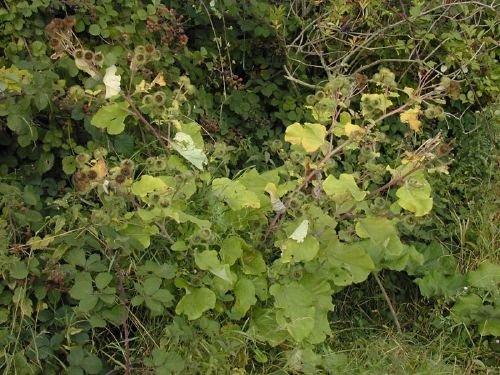 http://www.bioimages.org.uk/vfg/MWSt/Nikon950/2000/00-09/00-09-02/00I02D+1.jpg