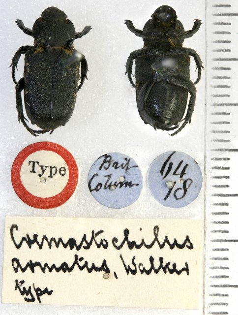 http://www.flickr.com/photos/nhm_beetle_id/5476601580/