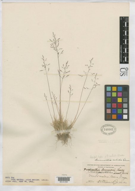 http://collections.mnh.si.edu/services/media.php?env=botany&irn=10049580