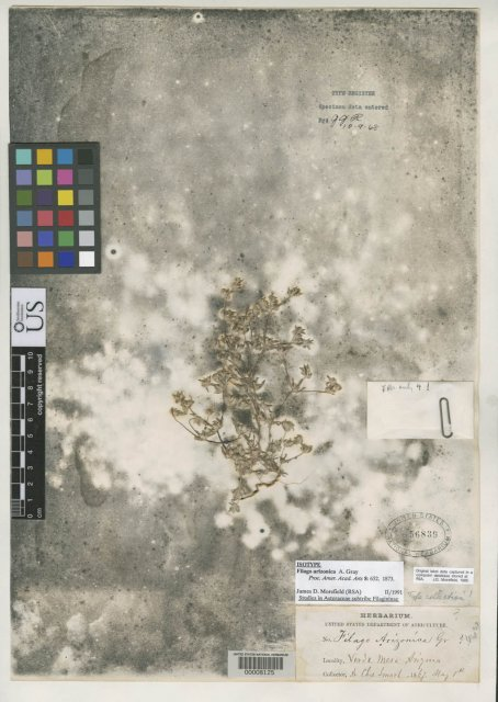 http://collections.mnh.si.edu/search/botany/?irn=2118854