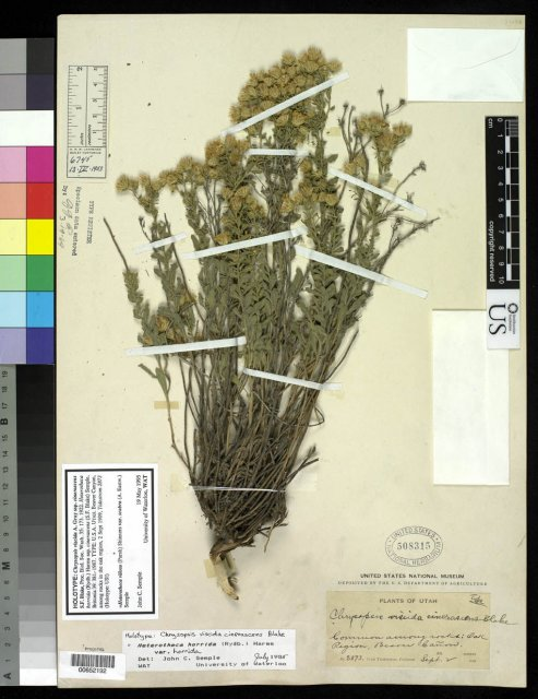 http://collections.mnh.si.edu/search/botany/?irn=2084896