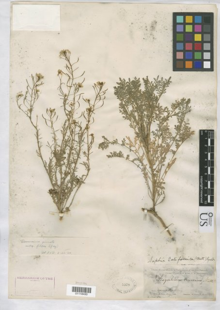 http://collections.mnh.si.edu/search/botany/?irn=10383928