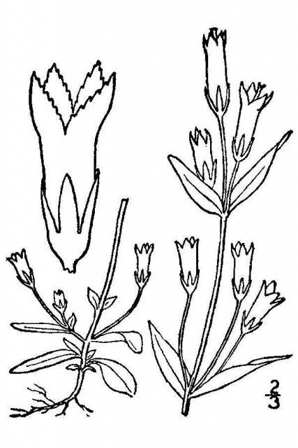 http://plants.usda.gov/java/largeImage?imageID=gepr7_001_avd.tif