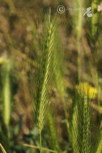 http://www.biolib.cz/IMG/GAL/90912.jpg
