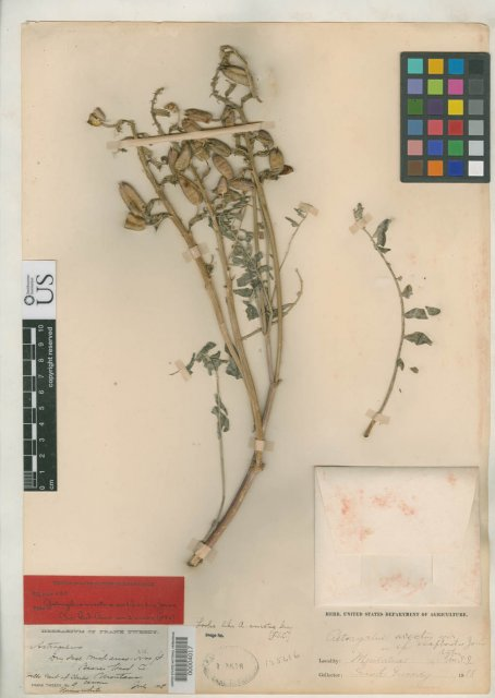 http://collections.mnh.si.edu/services/media.php?env=botany&irn=10114109