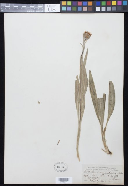 http://collections.mnh.si.edu/search/botany/?irn=10859929