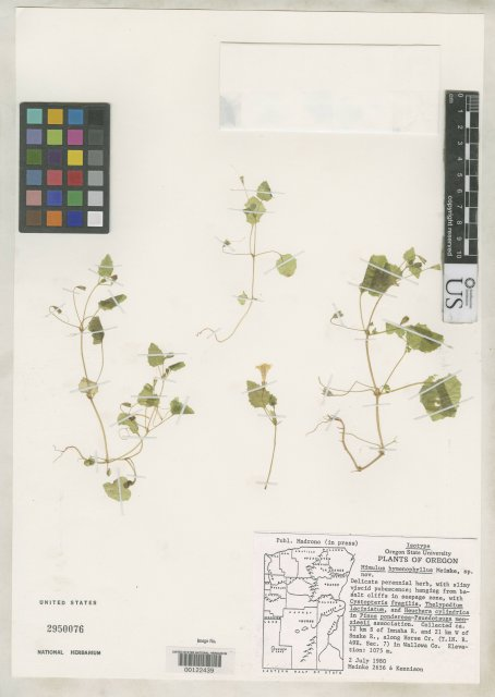 http://collections.mnh.si.edu/services/media.php?env=botany&irn=10063429
