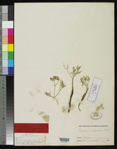 http://collections.mnh.si.edu/search/botany/?irn=2099801