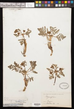 http://collections.mnh.si.edu/search/botany/?irn=10995749