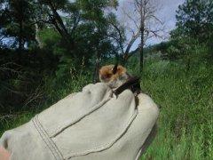 http://animaldiversity.ummz.umich.edu/site/resources/tanya_dewey/Myth2.jpg/medium.jpg