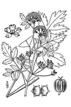 http://plants.usda.gov/java/largeImage?imageID=cegr11_001_avd.tif