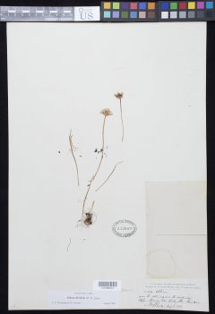http://collections.mnh.si.edu/search/botany/?irn=10958134