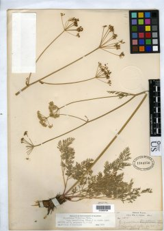 http://collections.mnh.si.edu/search/botany/?irn=10085872