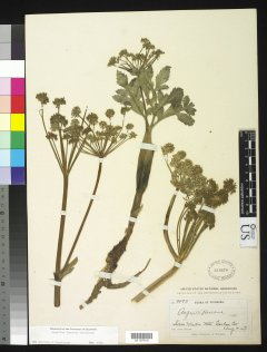 http://collections.mnh.si.edu/services/media.php?env=botany&irn=10254808