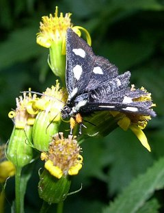 http://www.flickr.com/photos/50352333@N06/5129068651/