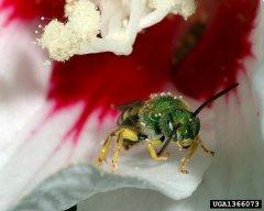 http://www.biolib.cz/en/image/id72245/