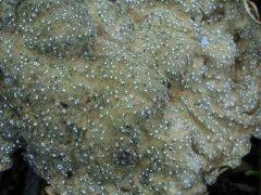 http://mushroomobserver.org/images/640/198772.jpg