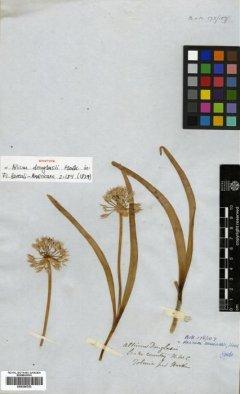 http://elmer.rbge.org.uk/bgbase/vherb/bgbasevherb.php?cfg=bgbase/vherb/bgbasevherb.cfg&specimens_barcode=E00386783