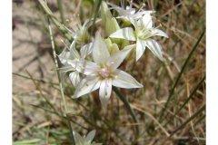 http://plants.usda.gov/java/largeImage?imageID=alne_004_ahp.jpg