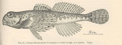 http://content.lib.washington.edu/cgi-bin/getimage.exe?CISOROOT=/fishimages&CISOPTR=39416&DMWIDTH=10000&DMHEIGHT=10000
