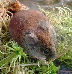 http://animaldiversity.ummz.umich.edu/site/resources/phil_myers/classic/cleth2best.jpg/medium.jpg