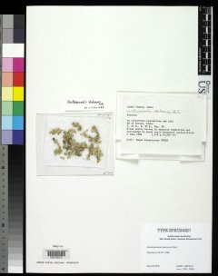 http://collections.mnh.si.edu/services/media.php?env=botany&irn=10090985