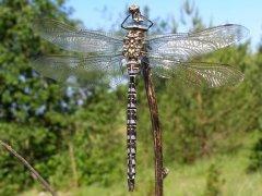 http://www.biolib.cz/IMG/GAL/65736.jpg