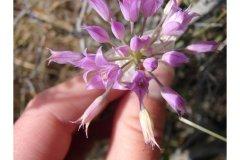 http://plants.usda.gov/java/largeImage?imageID=alac4_005_ahp.jpg